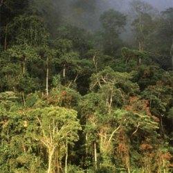Почему гибнут леса Амазонии?
