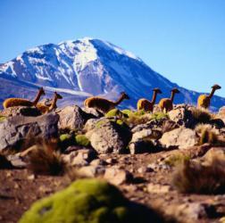 Интересное о Чили
